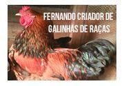 Fernando Criador de Galinhas de Raças  em Taubaté