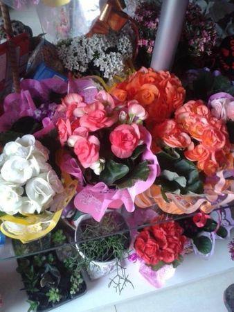 Floricultura 9 de Julho