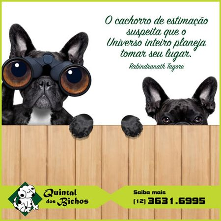 Clínica Veterinária Quintal dos Bichos