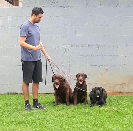 Dog Star - Escola de Obediência e Hotel para Cães