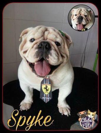 Clube dos Pets - Estética Animal