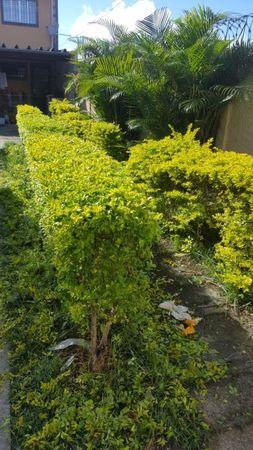 JR Jardinagem & Paisagismo