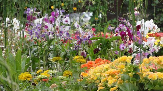 Recanto Garden Plantas e Paisagismo